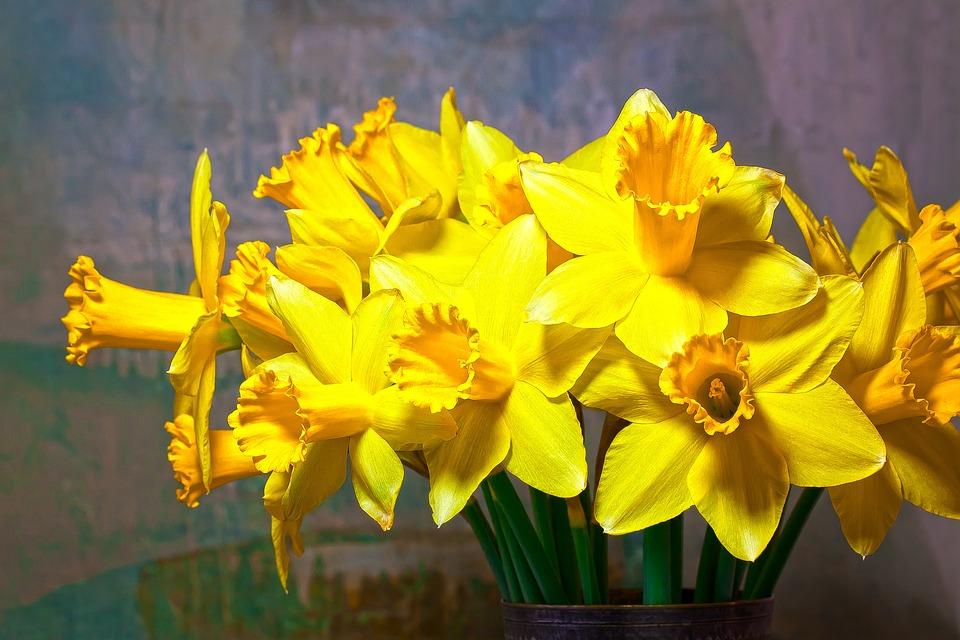 Spring, Narcissus, Amaryllis Plant, Daffodil, Flower