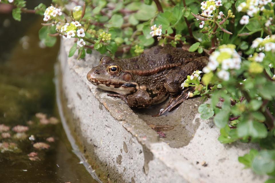 Frogs, Amphibians, White Flowers, Spring, Freshness