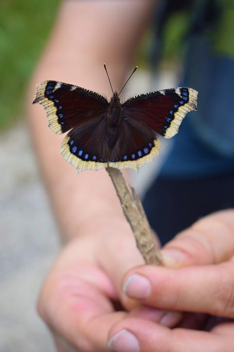 Butterfly, Forest, Nature, Animals, Spring, Wing