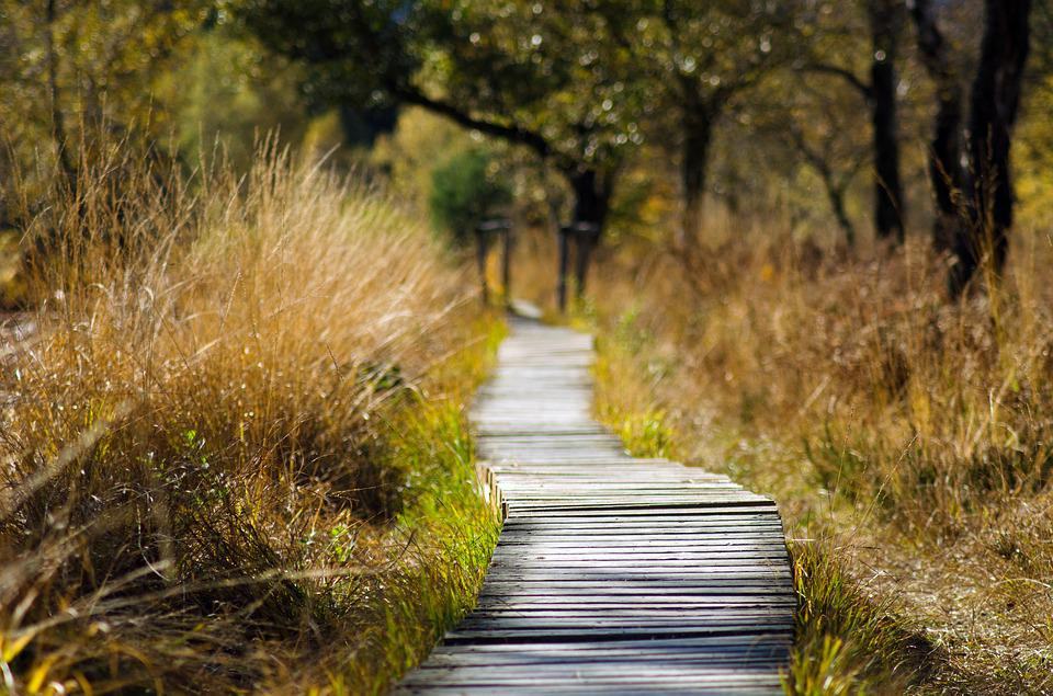 Wooden Track, Web, Away, Nature, Trail, Spring, Summer