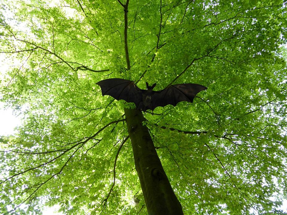 Bat, Fig, Deciduous Tree, Light Green, Spring