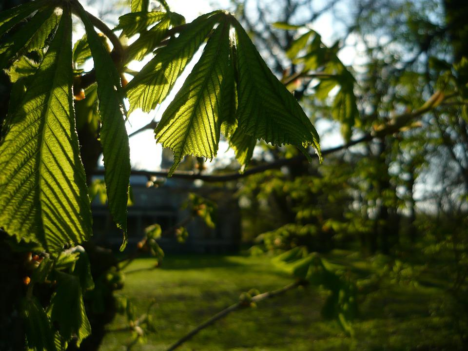 Green, Spring, Beautifull, Sun, Tree