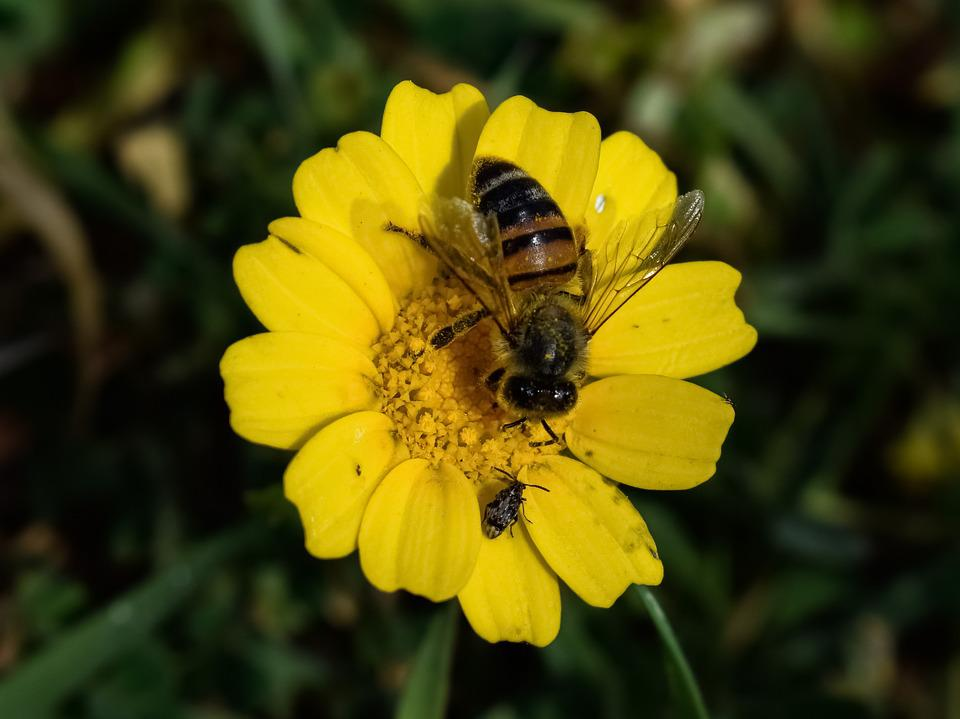 Bee, Insect, Nature, Pollination, Flower, Flora, Spring