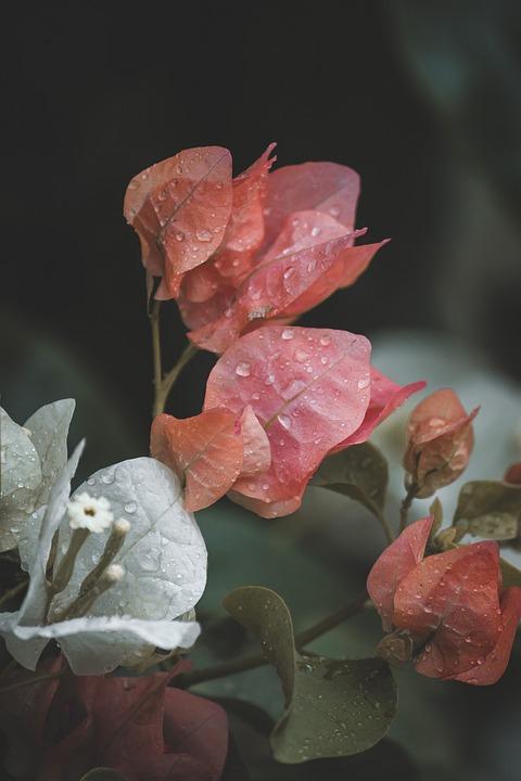 Flower, Nature, Blossom, Plant, Summer, Spring, Bloom