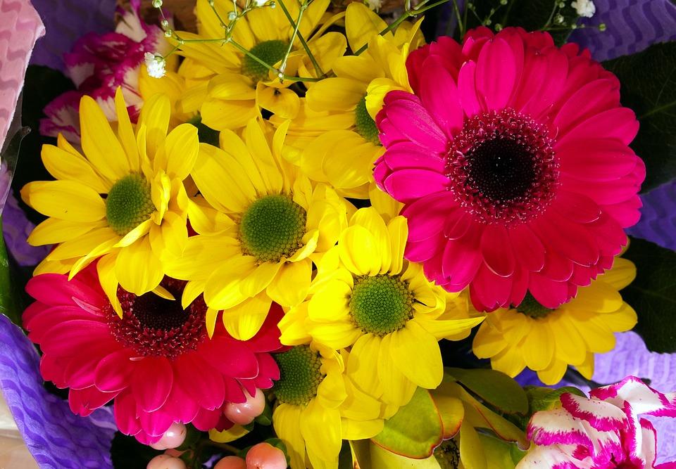 Flowers, Blossom, Bloom, Spring, Nature, Flora, Petals