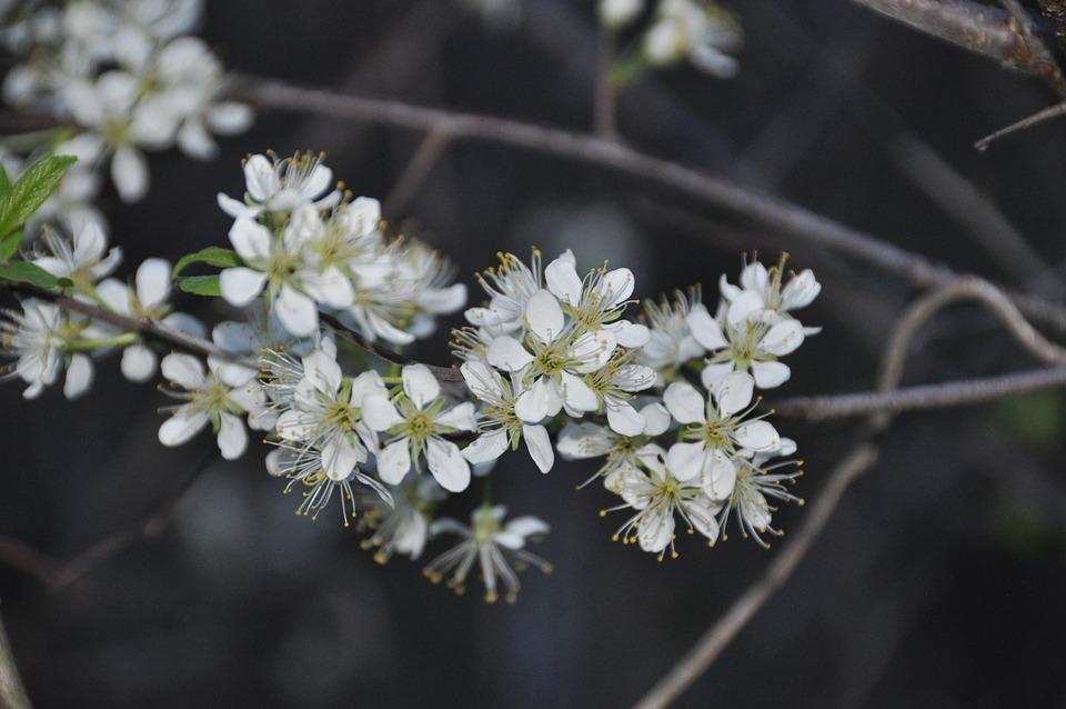 Flowers, White, Nature, White Flower, Spring, Bloom
