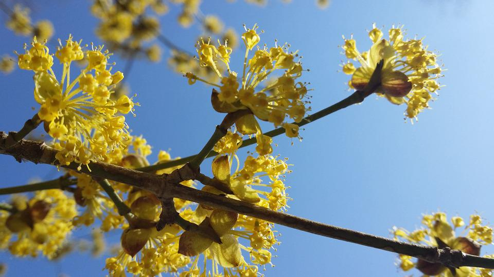 Spring, Blossom, Sky, Nature, Flower, Bloom, Blooming