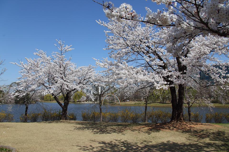 Wood, Spring, Season, Blue Sky, Scenery, Lake Park