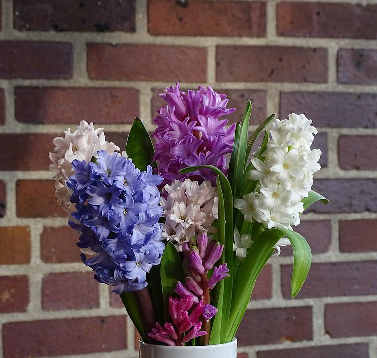 Free photo Spring Bouquet Of Flowers Flower Hyacinth - Max Pixel