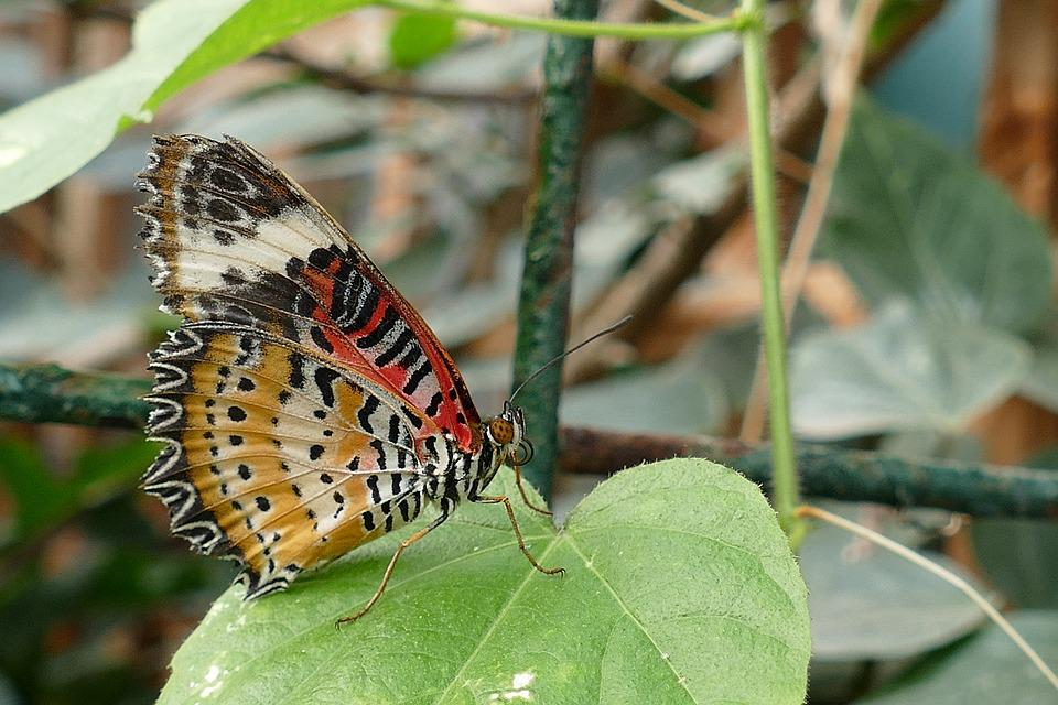 Butterflies, Insects, Butterfly, Nature, Spring, Garden