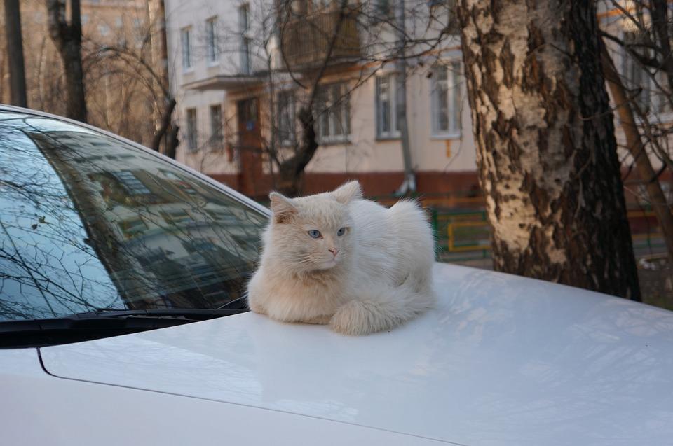 Spring, Cat, Cats, White Cat, Street Cat