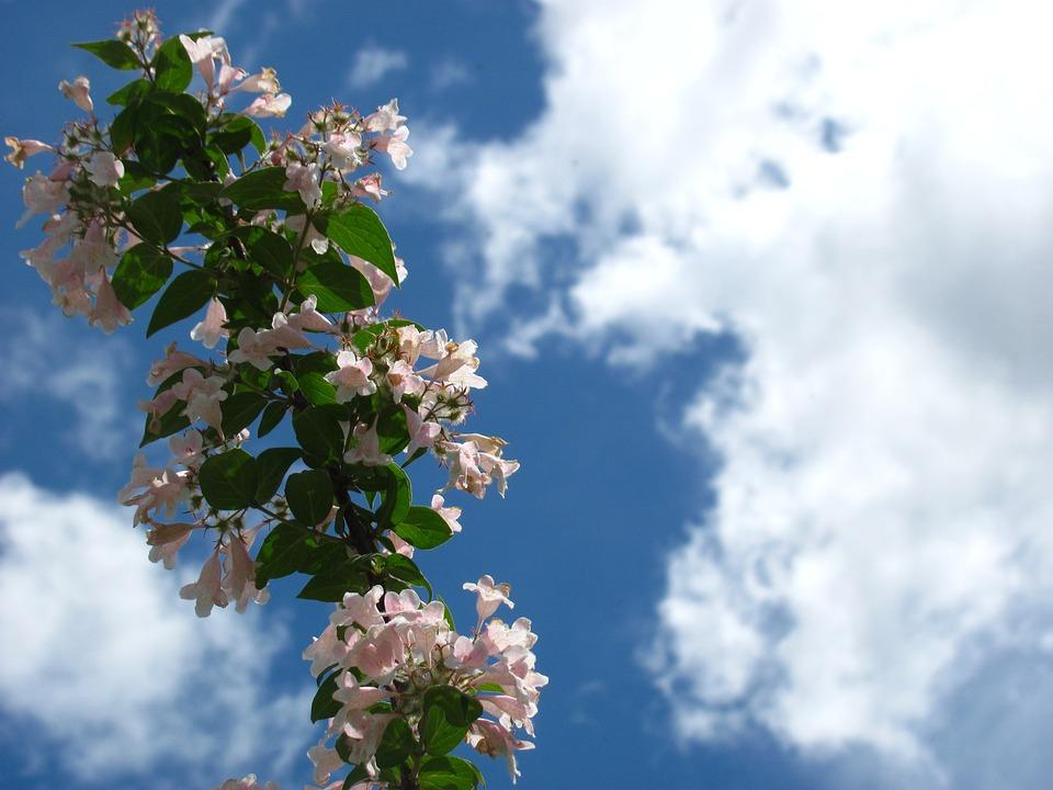 Sky, Flower, Cloud, Nature, Spring, Season, Blossom