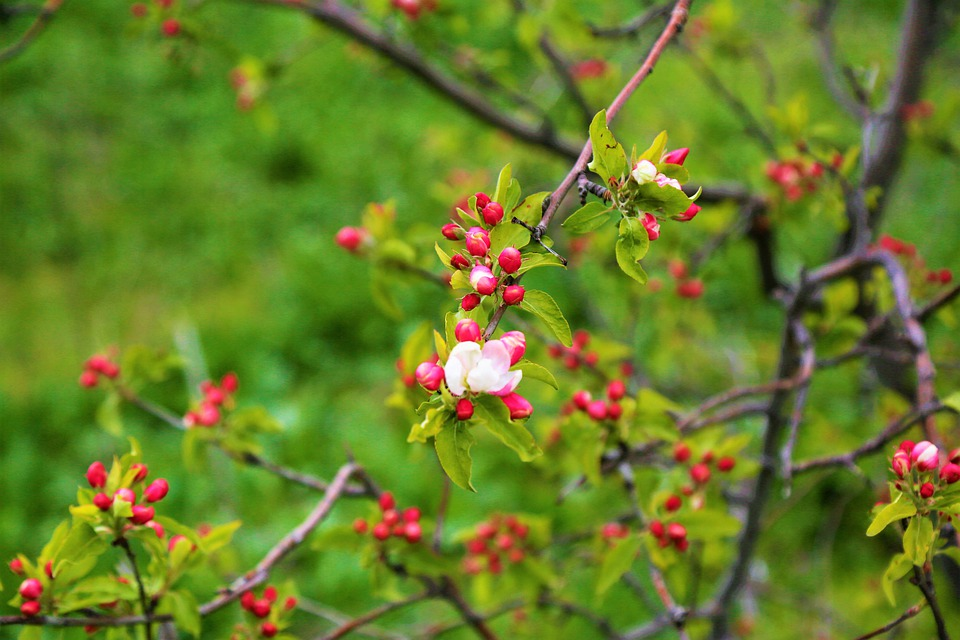 Flowers, Spring, Nature, Plant, Color, Pink, Buds, Tree