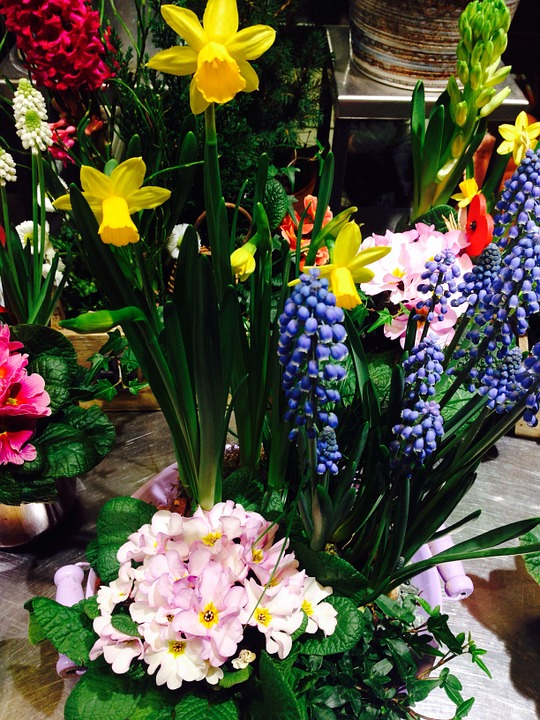 Flowers, Spring, Colorful