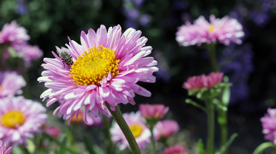 Flowers, Colorful, Pink, Spring, Fly, Flower, Summer