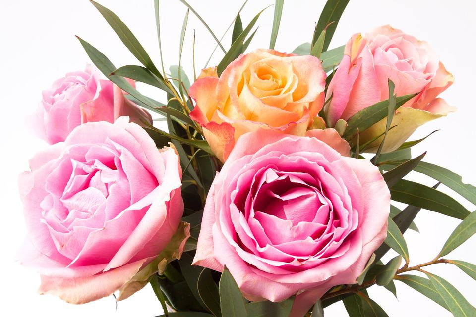 Rose, Bouquet, Flower, Composites, Spring, Nature