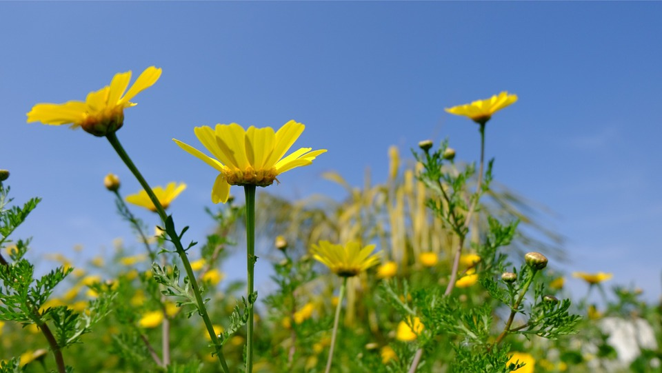 Flowers, Spring, Daisies, Field, Nature