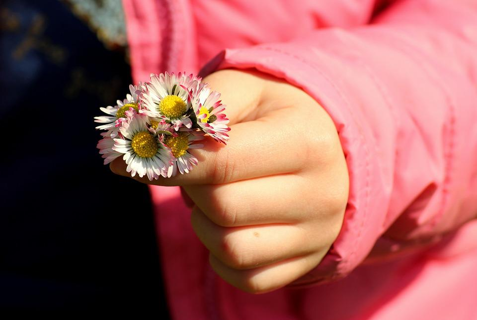 Daisies, Spring, Took, Handle Of The Child, Nature
