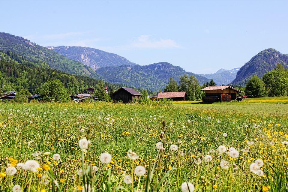 Austria, Dandelion, Mountains, Meadow, Panorama, Spring