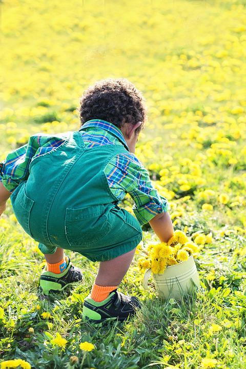 Little Boy In Dandelions, Dandelions, Yellow, Spring