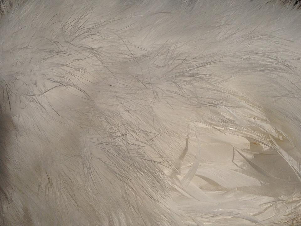 Spring Dress, Seidenhuhn, White