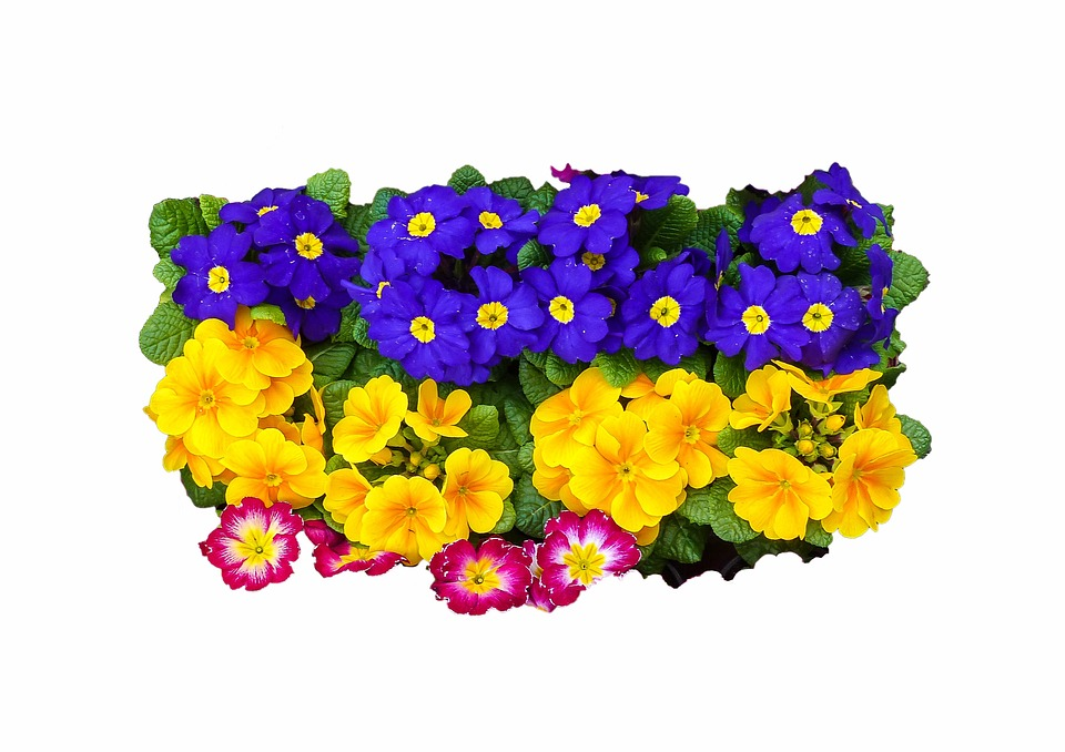 Flower, Easter Spring, Spring, Flowers, Pansy, Color