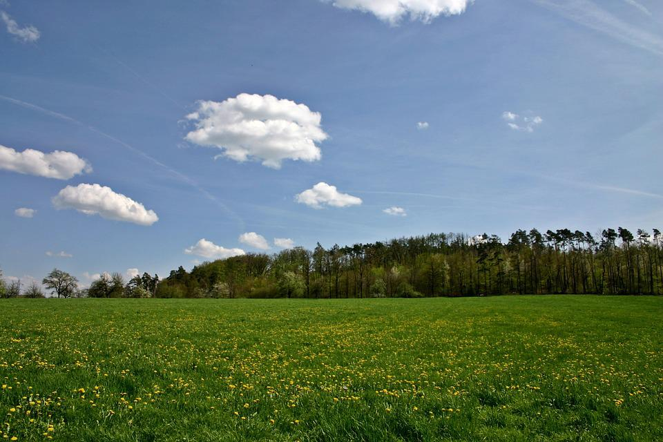Landscape, Spring, Hill, Forest, Edge Of The Woods