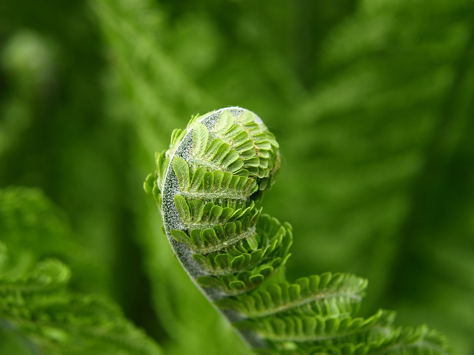 Fern, Green, Plant, Spring