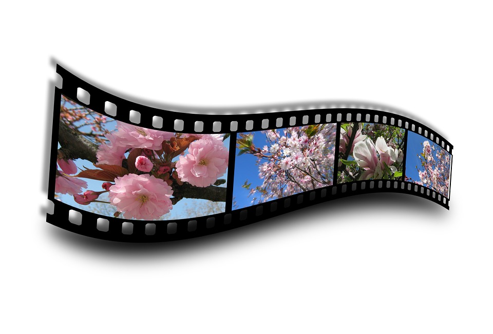 Spring, Film, Filmstrip, Bloom, Blossom, Bloom, Bud