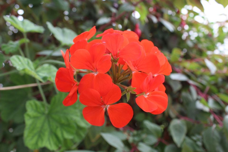 Flowers, Flora, Decoration, Bloom, Decorative, Spring