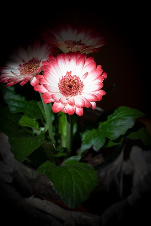 Flower, Blossom, Bloom, White, Pink, Spring Flower