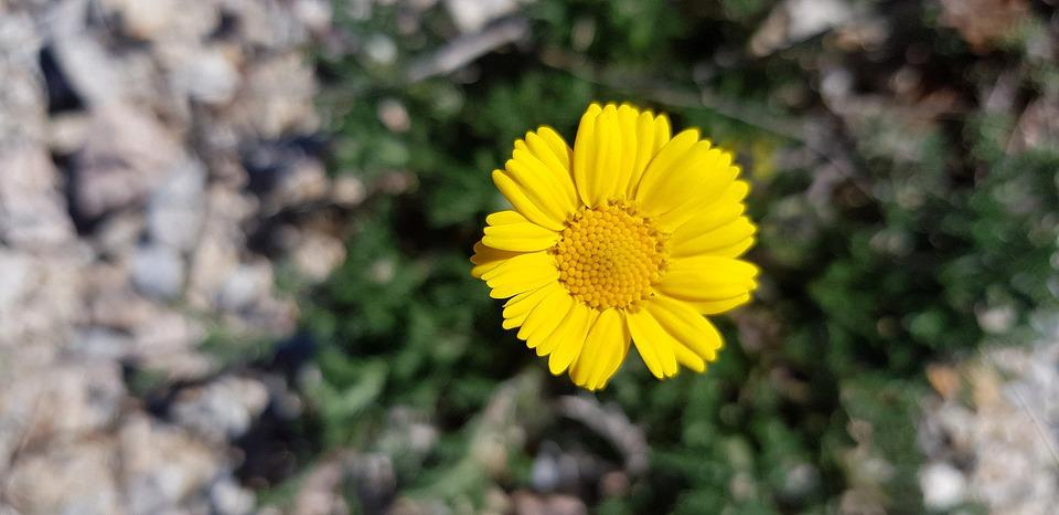 Nature, Plant, Flower, Spring, Botany