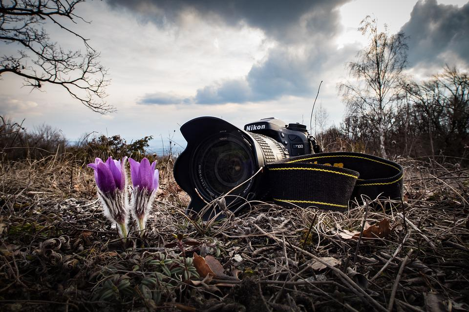 Camera, Nikon, Spring, Flower, Plant, Nature, Bloom