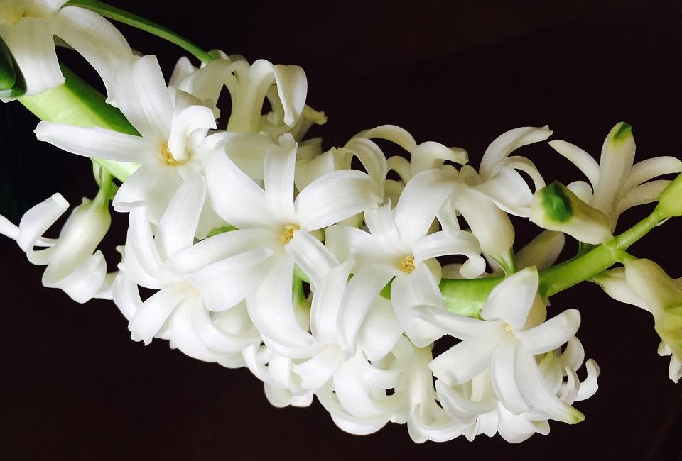 Flower, Spring, Easter, Spring Flower, Nature, Season