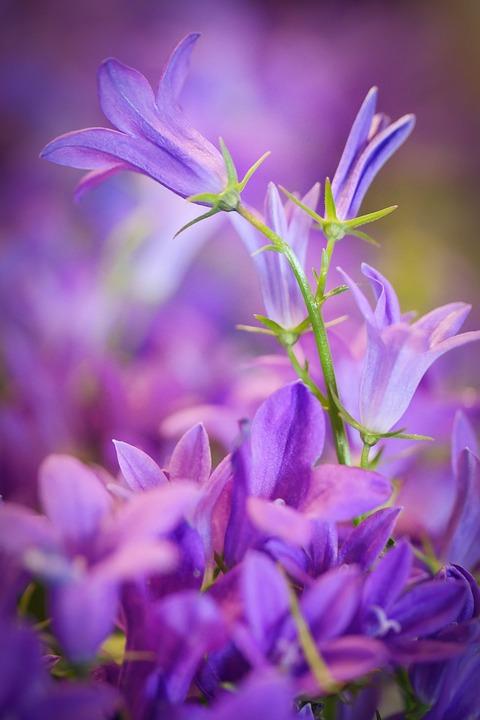 Flower, Nature, Plant, Spring, Garden, Blossom, Bloom