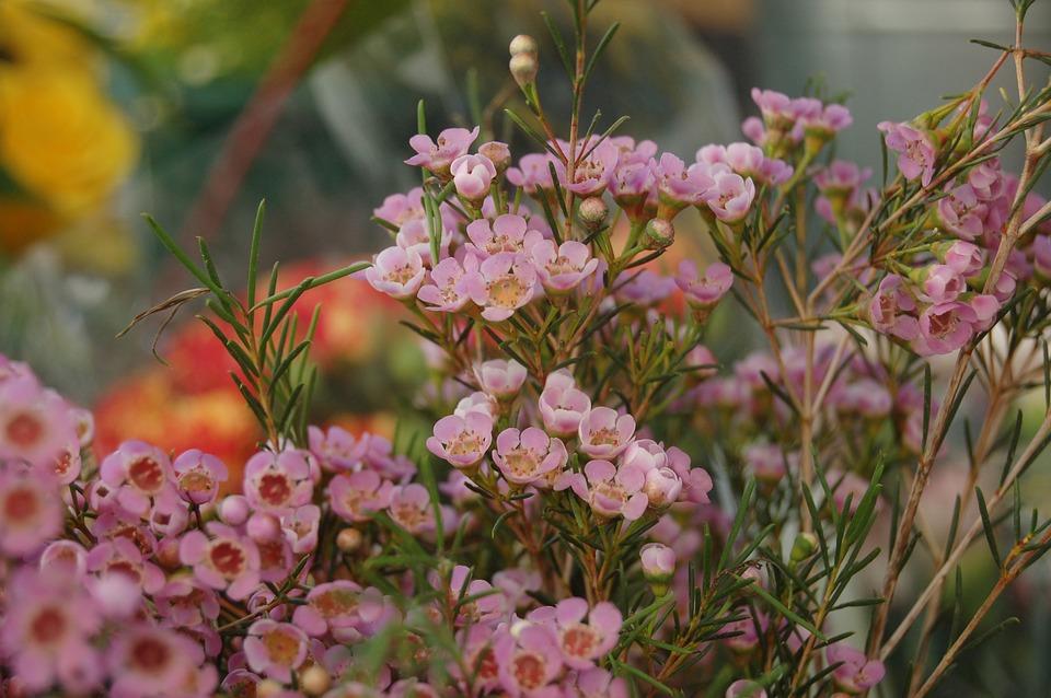 Flower, Nature, Garden, Bloom, Spring, Flowers