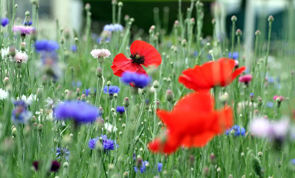 Free photo spring flower garden nature flowers perfume max pixel flowers flower garden nature perfume spring mightylinksfo