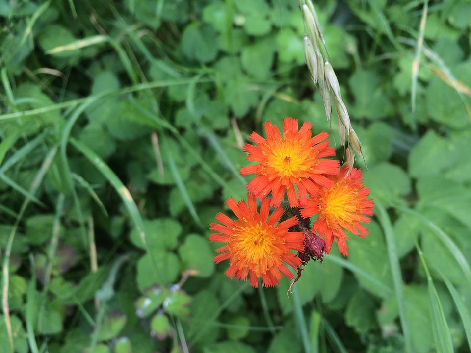 Flower, Orange, Summer, Nature, Garden, Spring, Macro