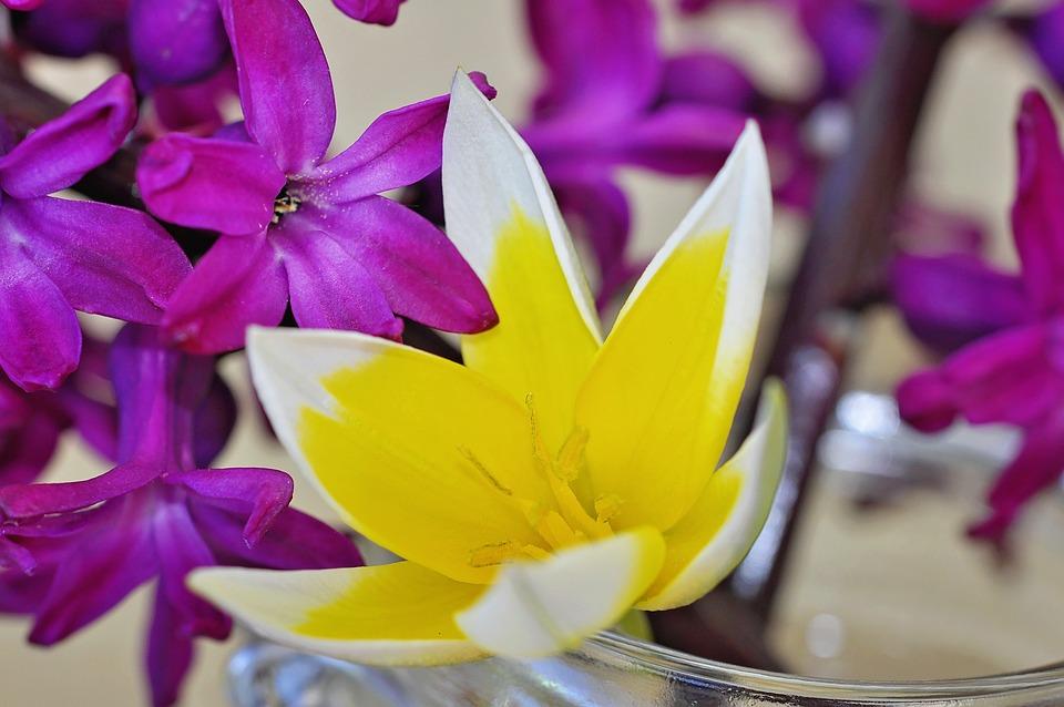 Free photo spring flower hyacinth flower fragrant flowers max pixel hyacinth flower spring flower fragrant flowers mightylinksfo
