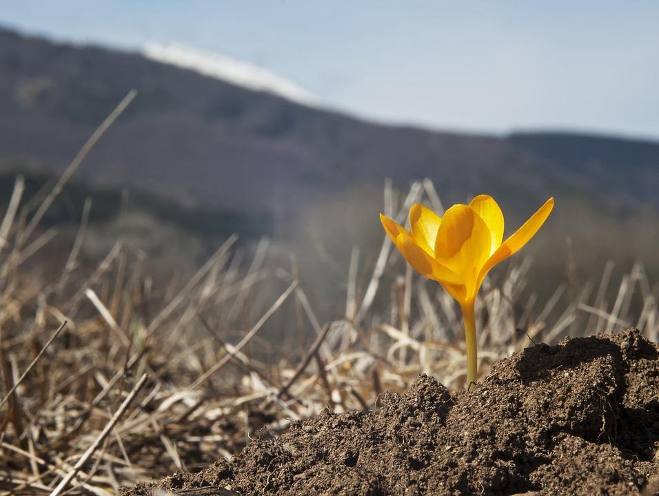 Spring Flower, Wild Flower, First Crocus, Orange Flower