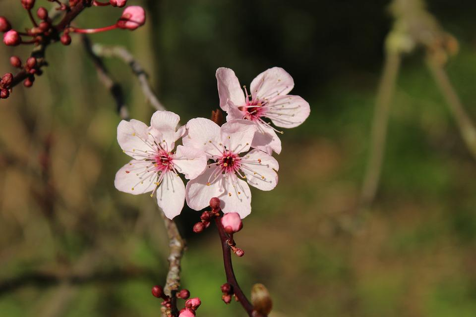 Spring, Blossom, Park, Spring Flower