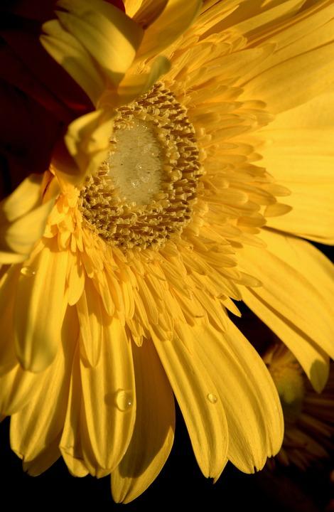 Yellow, Flower, Spring, Daisy, Garden, Color, Blossom