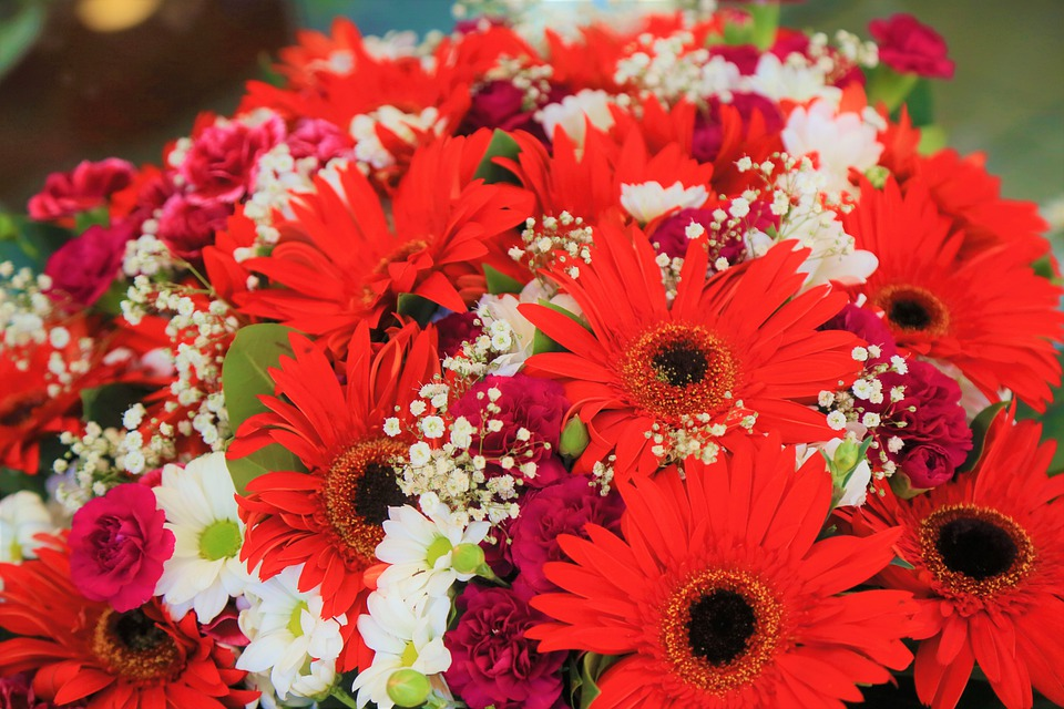 Flowers, Spring, Nature, Color, Plant, Red, White
