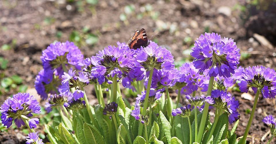 Flowers, Drumstick, Garden, Spring, Spring Flowers