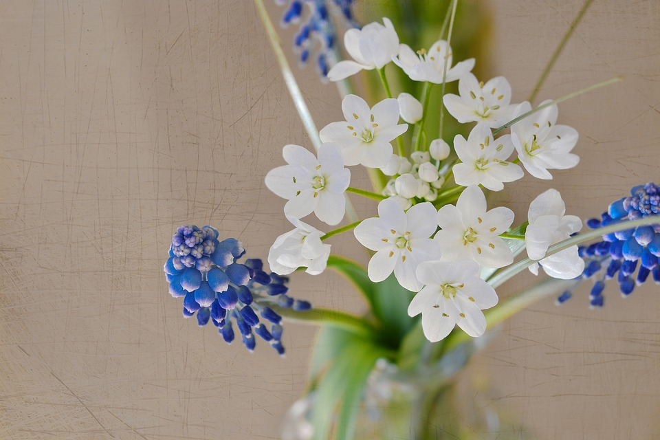 Flowers, Bouquet, Spring, Spring Flowers, Hyacinth