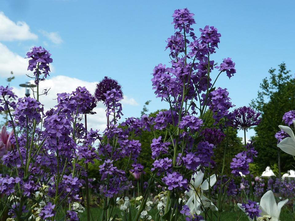 Purple, Spring Flowers, Flowers, Violet, Spring