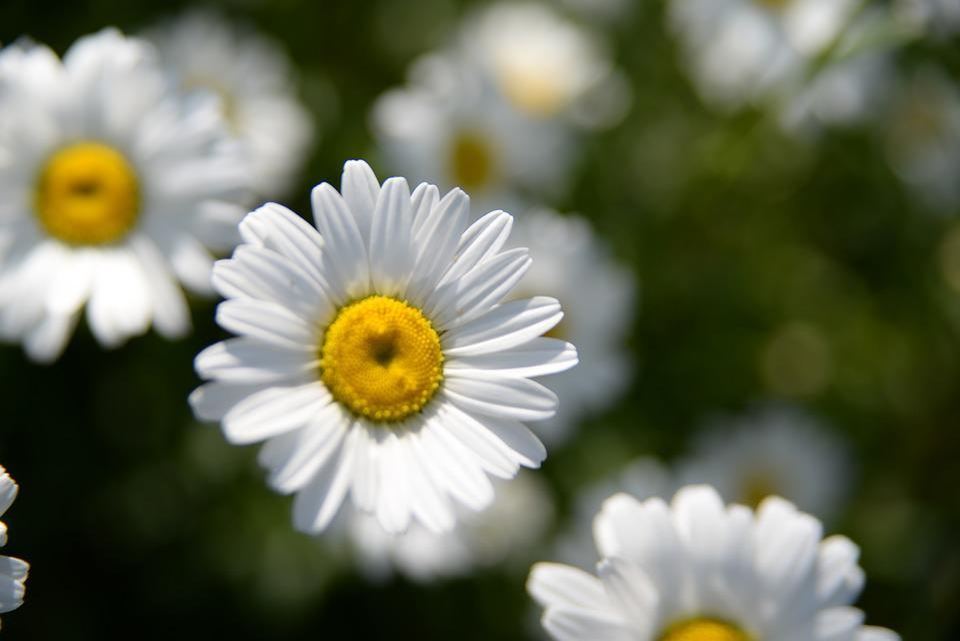 Flowers, Flower, Nature, Bloom, Garden, Spring, Flora