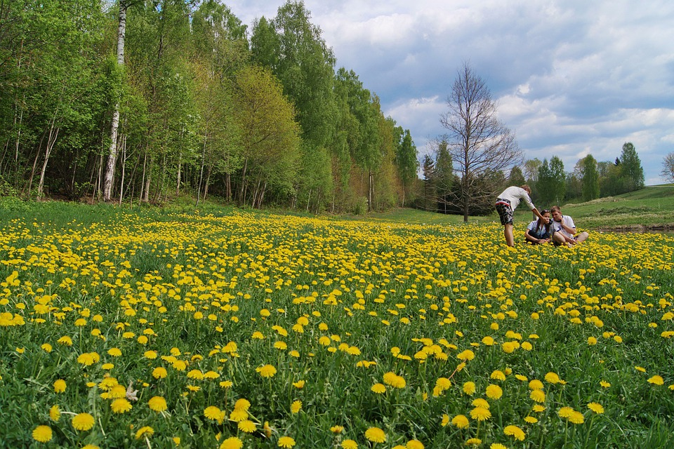 Meadow, Spring, Nature, Yellow, Grass, Flowers