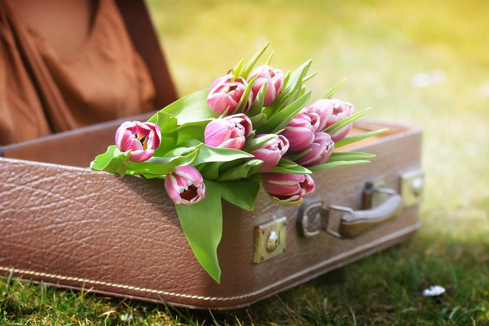 Luggage, Tulips, Spring, Flowers, Spring Flower, Nature