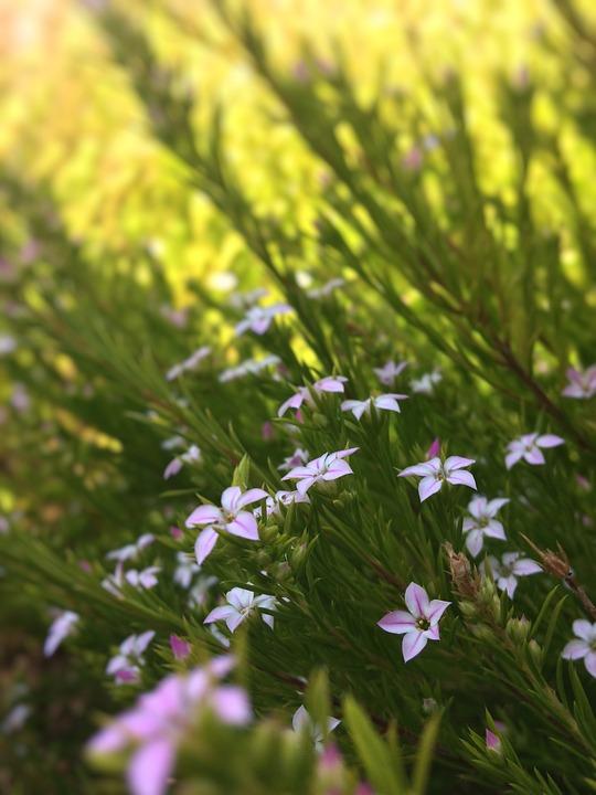 Flowers, Pink, Bush, Green, Spring